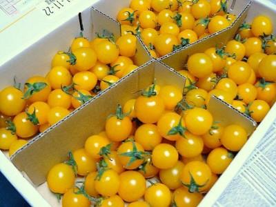 純愛トマトというゴールデントマト。(広田農園:栃木県足利市)