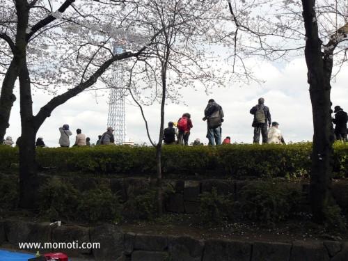 隅田公園にて