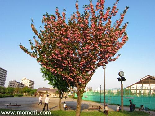 汐入公園の何だかわからない花
