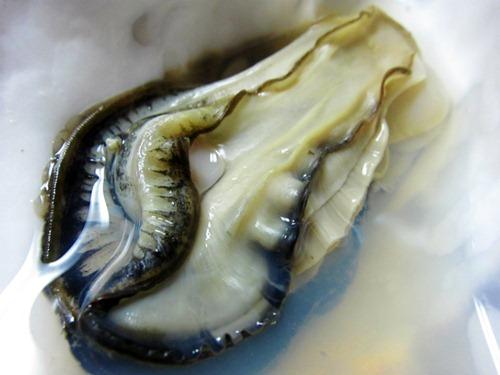 サロマ湖の牡蠣