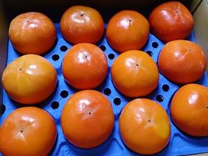 糸貫の富有柿