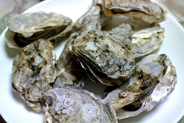 藻琴湖の牡蠣