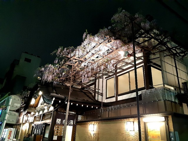 曙湯と藤の花(平成31年4月)