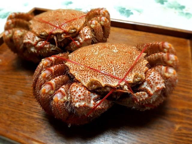 オホーツクの流氷明けの毛蟹