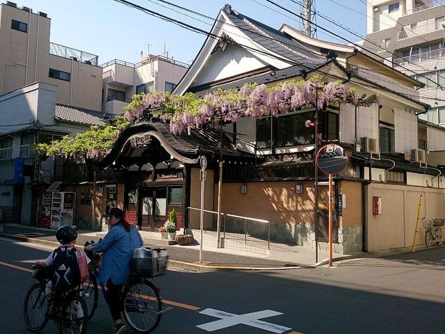 曙湯に藤の花