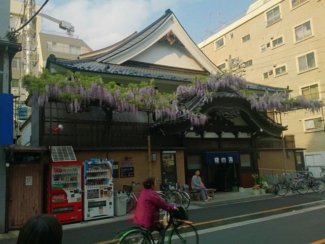 曙湯と藤の花
