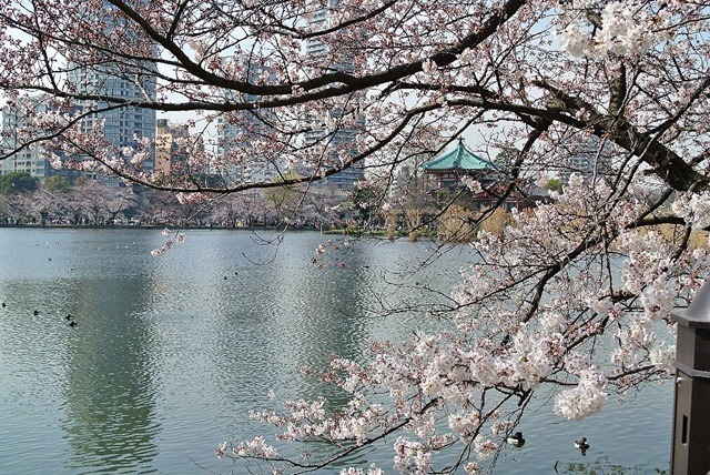 2015上野不忍池